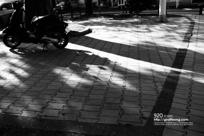 建物の前の道。朝の光が素敵でした。木漏れ日好き。