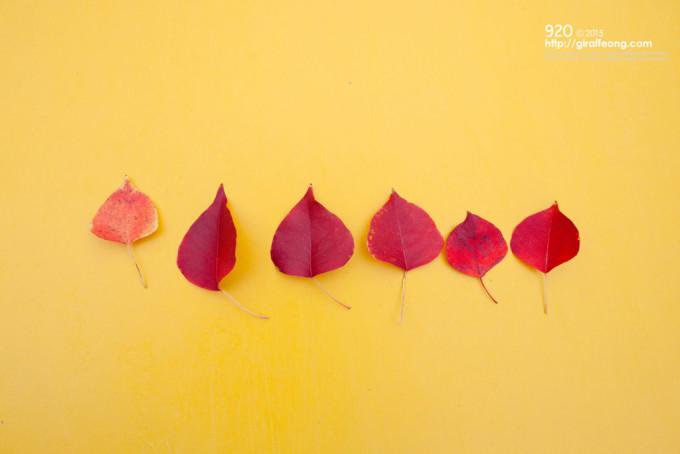 集まってくれたベストファイブ紅葉と、黄色さがいなせなプラスワン。