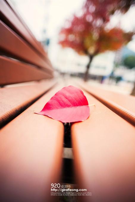 ベンチで休む紅葉