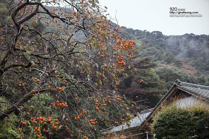 柿の実がたわわにみのっている山頂付近の屋敷