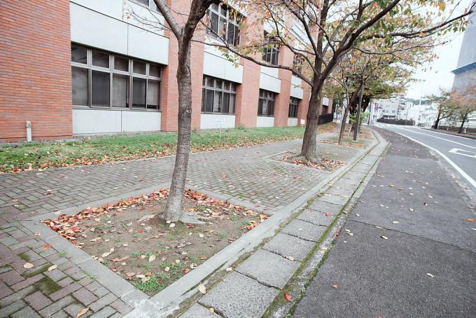 この並木の地面も季節ごとに彩られるポイント