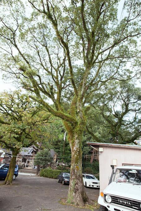 分かりにくいけどカッコいい木。木の表面にたくさん草が生えているのがカッコいい