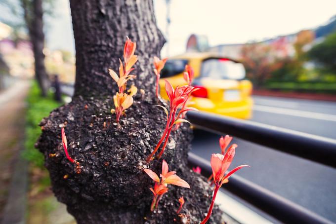 木から芽吹く若木?冬直前だというのに健気な木だなと思いました。
