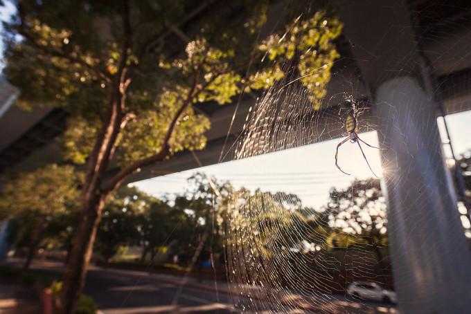 蜘蛛を嫌いな人は多いかと思うのですが、僕は蜘蛛の事嫌いではないです。蜘蛛の巣の形や、蜘蛛自体の形や生き方ってとても良く出来ているなと思います。