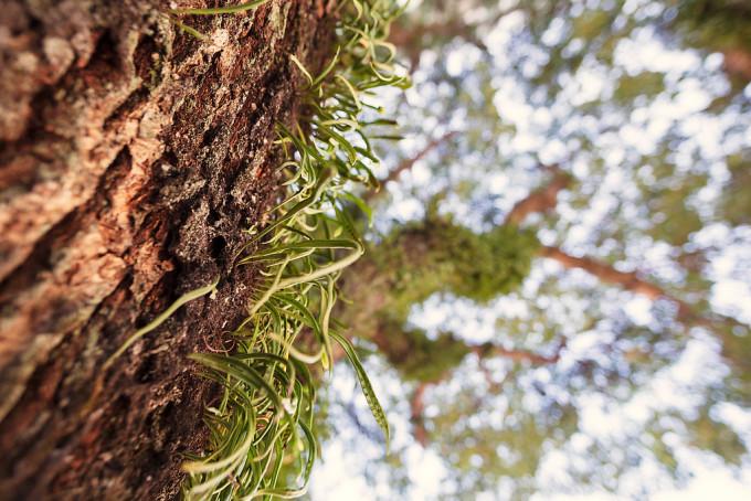 木の表面に生える草が好きです。これは木自体から生えているのでしょうか、それとも別の草の種がひっついて生えているのでしょうか。