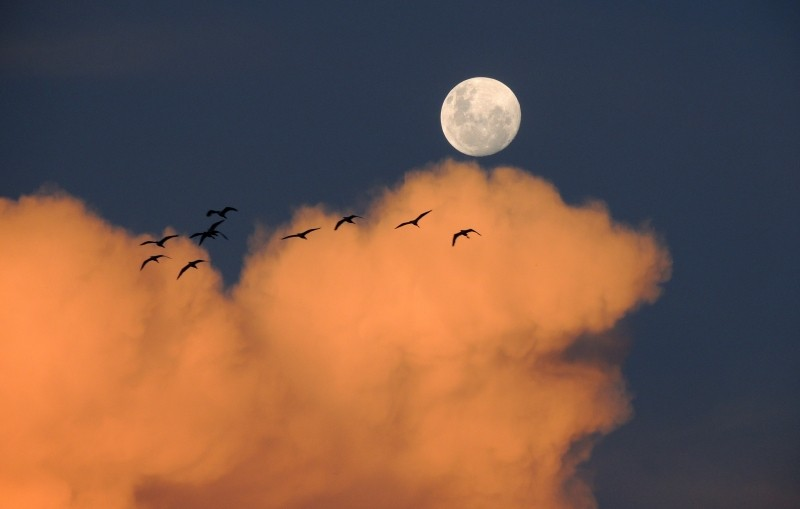 moon-sky-clouds-day-birds-of-day