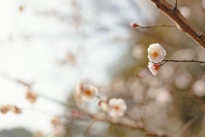 梅も咲く、春の陽気です。