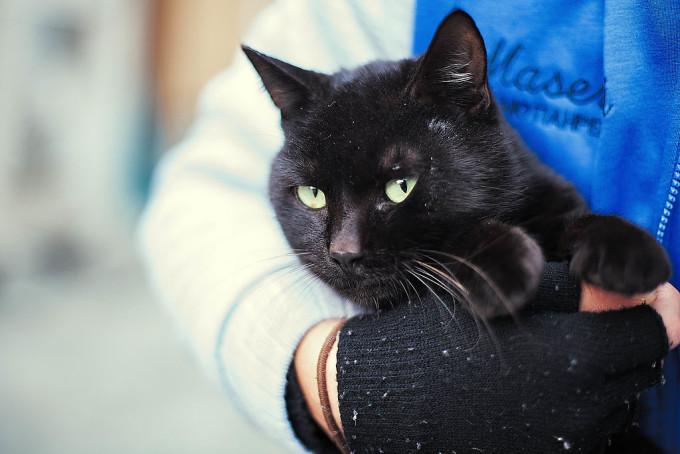 黒キャット。猫の目はなぜこんな瞳孔の形をしているんだろう。そう思ってしらべて見たところ、草むらで生活する動物にはこの瞳の形が役立つからだと。
