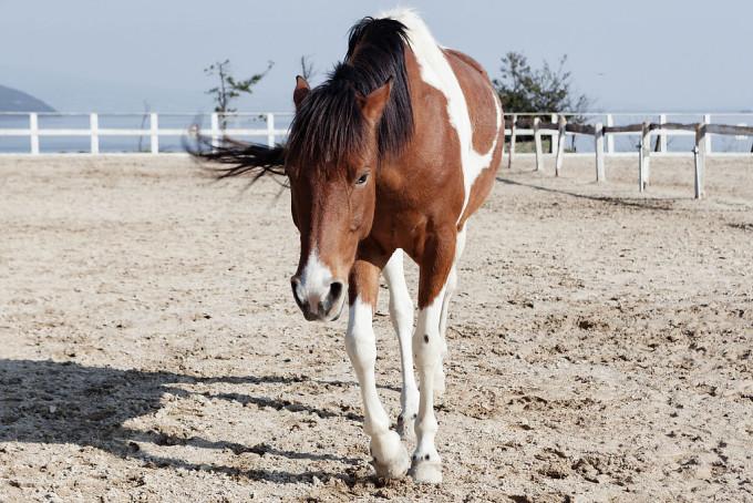 西海市には馬もおります。