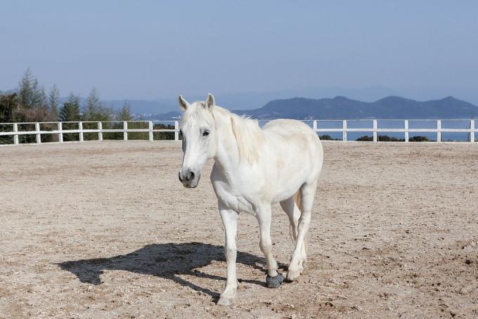 神経質っぽかった白馬。