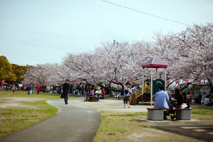 ニミッツパークは毎年多くの花見客で賑わいます