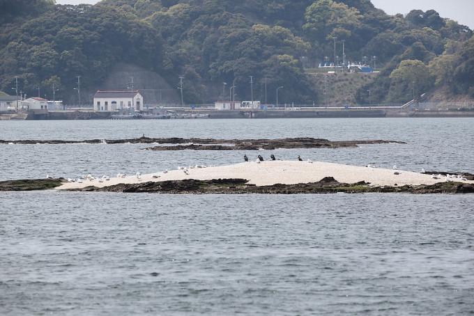 かもめかな?たくさんの鳥が羽を休める小島があったのです。