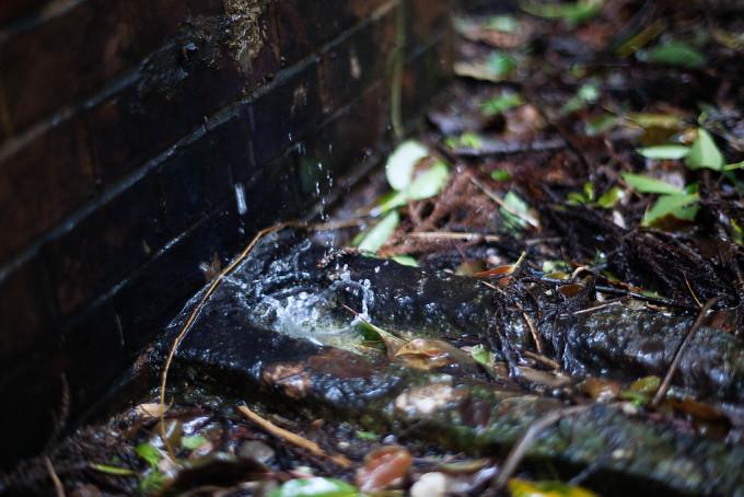 100年以上も前から、ここには水滴が落ち続けているのでしょうか。