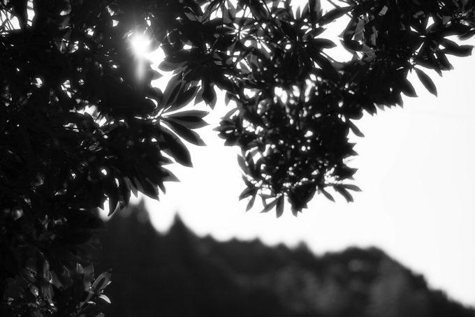 IMG_0602-Edit