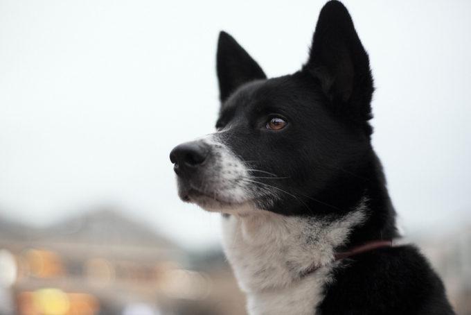 ペグはいつも、のぐちくんから丁寧なブラッシングを受けています。毛並みのよい、とてもかわいい犬です。