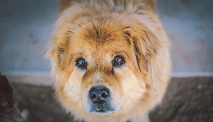 portrait-of-cute-dog-contemplating
